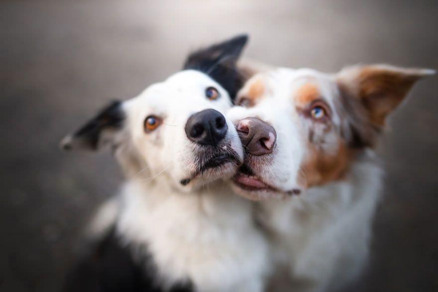 گالری تصاویری از لبخند سگ ها
