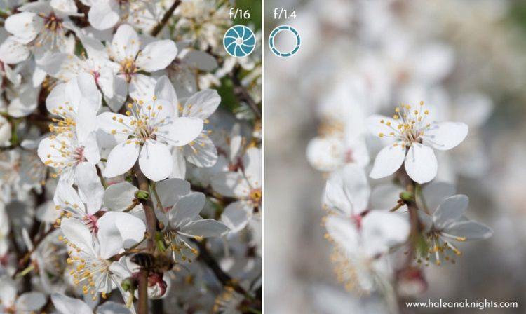 ۵ گام برای استفاده از تنظیمات دستی در عکاسی با دوربین