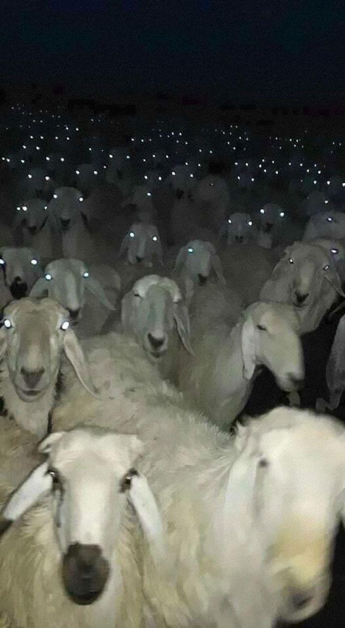گالی تصاویر حیوانات از ادگار آلن