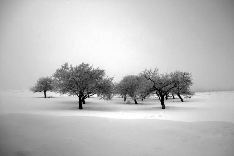 نمونه تصویر گرفته شده از درختان توسط علی شکری