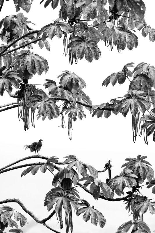 نکات طلایی برای ثبت تصاویر متفاوت از طبیعت