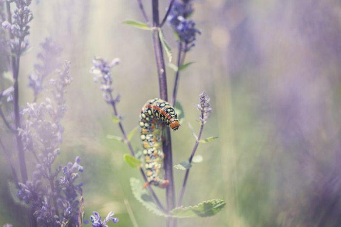 Matt doogue/nature photography/عکاسی طبیعت