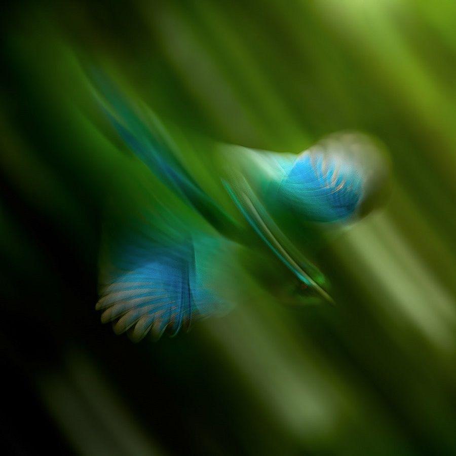 نکات عکاسی از طبیعت
