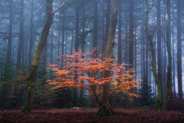 عکاسی از مه پاییزی