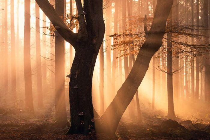 عکاسی از پرتوهای نور پاییزی